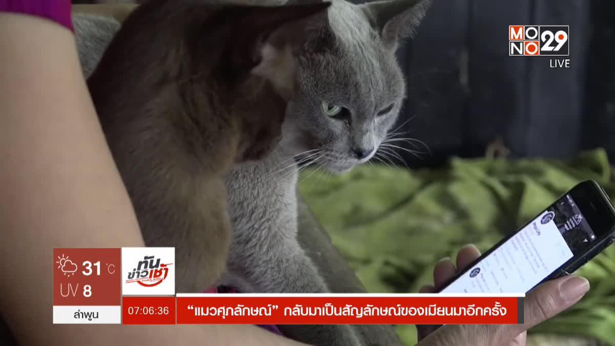 """""""แมวศุภลักษณ์"""" กลับมาเป็นสัญลักษณ์ของเมียนมาอีกครั้ง"""