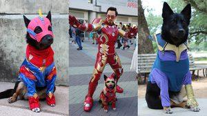 Avengers : เอ๋งเกม เมื่อเหล่าเจ้าตูบแต่งตัวคอสเพลย์ Avengers เปิดจักรวาลสี่ขา
