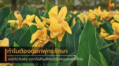 ดอกไม้วันพ่อ ดอกไม้สัญลักษณ์วันพ่อแห่งชาติไทย