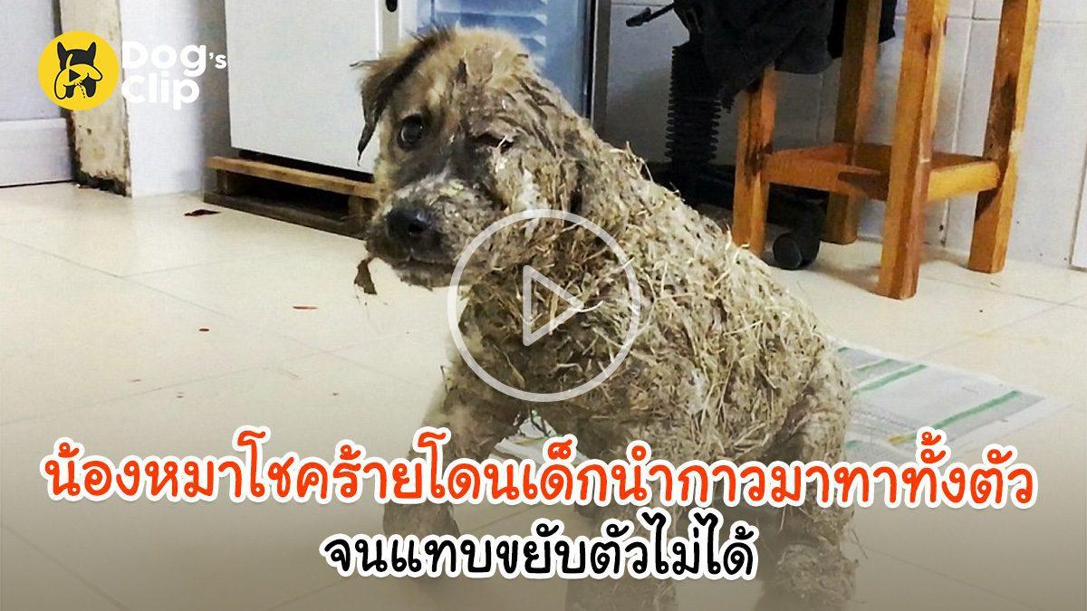 น้องหมาโชคร้ายถูกกลุ่มเด็กนำกาวมาทาทั้งตัว จนแทบขยับตัวไม่ได้  | Dog's Clip