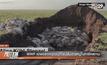 WWF แถลงสาเหตุแอนทีโลปล้มตายหมู่ในคาซัคสถาน