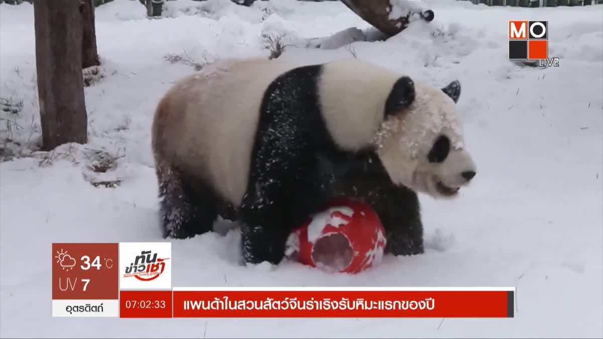 แพนด้าในสวนสัตว์จีนร่าเริงรับหิมะแรกของปี