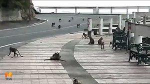 จวกยับ! หนุ่มพกหนังสติกยิงลิงตาบอด-พิการ บนเขาสามมุข