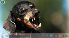 อย. ยืนยัน! ไม่มีการนำเข้าวัคซีนพิษสุนัขบ้า จากผู้ผลิตในจีนที่มีปัญหาคุณภาพ
