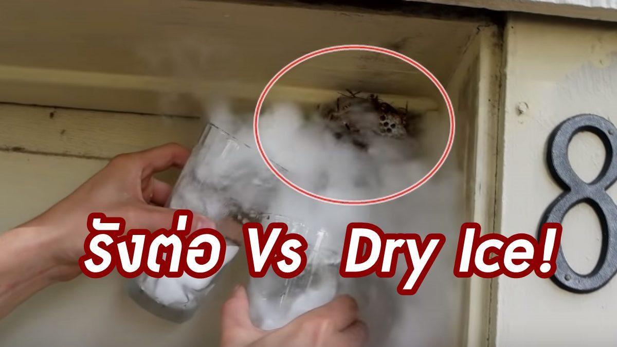 รังต่อหรือจะสู้ Dry Ice! จัดการด้วยวิธีนี้ เป็นยังไงเดี๋ยวรู้เรื่องเลย