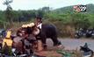 ช้างคลุ้มคลั่งในอินเดีย