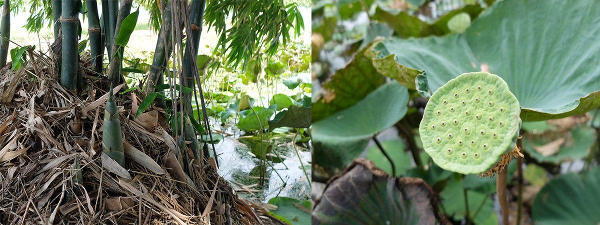 ชุมชนท่องเที่ยวตำบลบ้านแหลม จ.สุพรรณบุรี