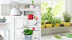 วิธีเพิ่มความเขียวขจี ภายในบ้าน สำหรับคนที่มี พื้นที่น้อย