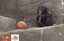 สวนสัตว์สหรัฐฯ จัดกิจกรรมทำลายฟักทองให้แก่สัตว์
