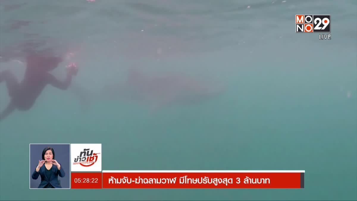ห้ามจับ-ฆ่าฉลามวาฬ มีโทษปรับสูงสุด 3 ล้านบาท