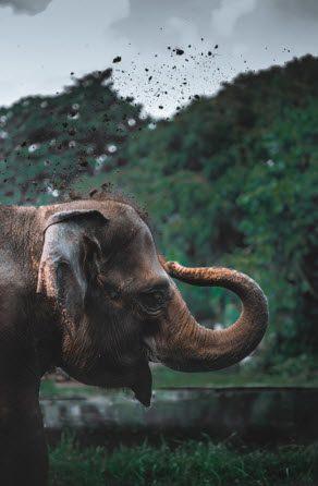 แนะนำปางช้าง! อยากให้อาหารช้างที่ภูเก็ตไปปางช้างไหนที่ดี?
