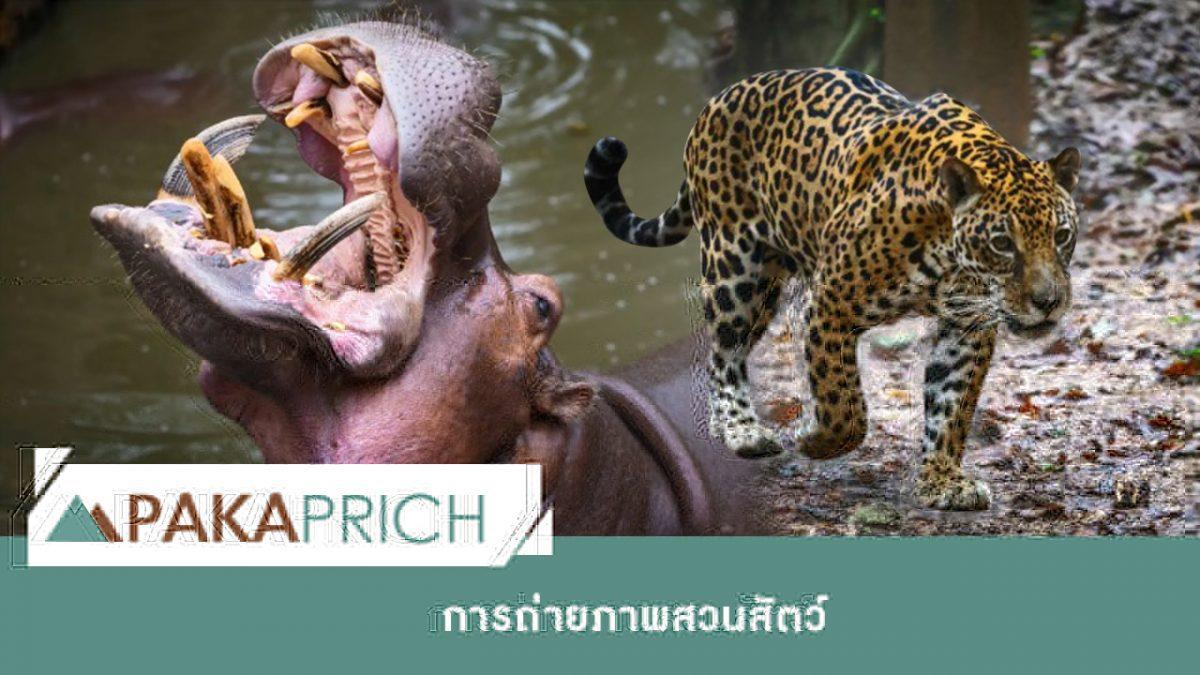 เทคนิคการถ่ายภาพสวนสัตว์ให้ว้าว
