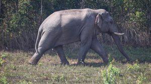 กรมอุทยานแห่งชาติฯ เร่งแก้ไขปัญหาช้างป่า บุกรุกพื้นที่เกษตรกรรม