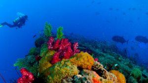 10 สถานที่ แหล่งดำน้ำ สวยที่สุดในโลก 2013