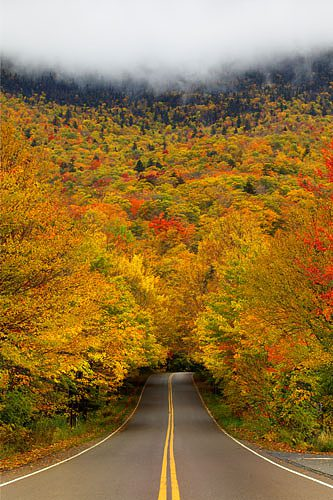 autumn-tree-tunnel-usa