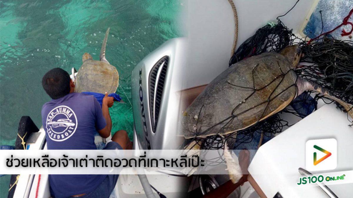 คลิปนาทีกลุ่มชายหนุ่มพนักงานเรือที่เกาะหลีเป๊ะช่วยเหลือเต่าติดอวด (02-05-61)