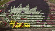 ทุ่งดอกทิวลิปตัวการ์ตูน เมืองทันโจ ญี่ปุ่น