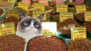 เพจดังเตือน ซื้ออาหารแมวเทขาย เสี่ยงติดเชื้อโรค