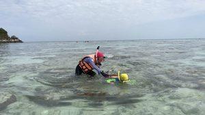 ทัวร์จีนเหยียบปะการัง จับหอยเม่น-ปลานีโม่ บนเกาะหลีเป๊ะ