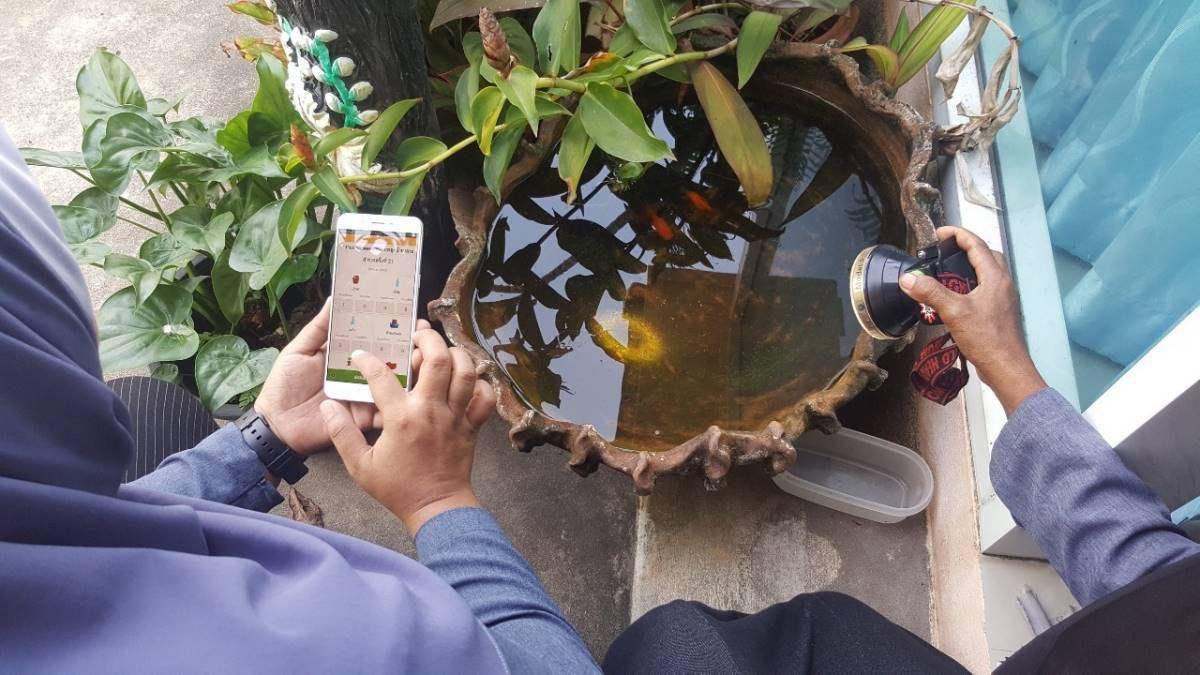 รพ.สต.บ้านเกาะ ยะลา' รับมือไข้เลือดออกระบาด เตรียมใช้แอป อสม.ออนไลน์สำรวจลูกน้ำยุงลาย