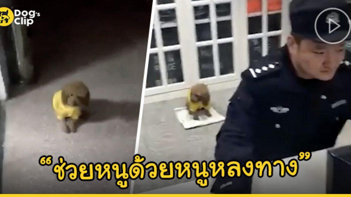 น้องหมาแสนรู้ วิ่งเข้าหาตำรวจเพื่อขอความช่วยเหลือ หลังพลัดหลงกับเจ้านาย