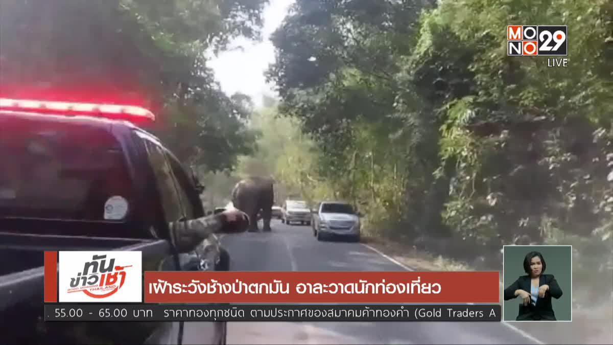 เฝ้าระวังช้างป่าตกมัน อาละวาดนักท่องเที่ยว