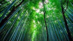 10 ป่าพิศวง ที่น่าหลงเข้าไปเดิน สวยงามเหมือนโลกเทพนิยาย
