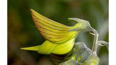green birdflower ดอกไม้ รูปนกฮัมมิ่งเบิร์ดแบบนี้ก็มีด้วยเหรอ?