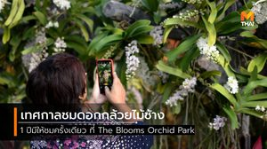 1 ปีมีครั้งเดียว เทศกาลชมดอกกล้วยไม้ช้าง ณ The Blooms Orchid Park