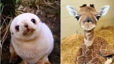 ดูไปยิ้มไป ภาพความน่ารักของสัตว์โลก ตอนยังโตไม่เต็มวัย