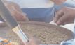 โรงสีคุมเข้มป้องกันปลอมปนข้าวหอมมะลิพันธุ์ 105