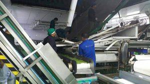 ระทึก! ฝ้าเพดานโรงงานแปรรูปเกษตรถล่ม บาดเจ็บกว่า 17 คน