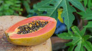 ใบมะละกอ พืชพื้นบ้านใกล้ตัว ช่วยรักษามะเร็ง ได้จริงหรือไม่?