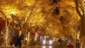 """อุโมงค์ """"แปะก๊วย"""" เมืองเทียนสุ่ย ประเทศจีน"""