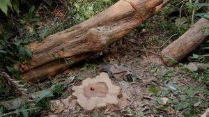 มนุษย์ใจร้าย! ฆ่าหมา 14 ชีวิต เพื่อลักลอบตัดไม้พยุง