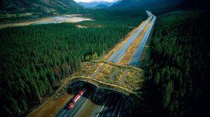 อะเมซิ่ง! 15 ภาพสะพานลอยสำหรับสัตว์ (Animal Bridges) ช่วยชีวิตได้นับพัน
