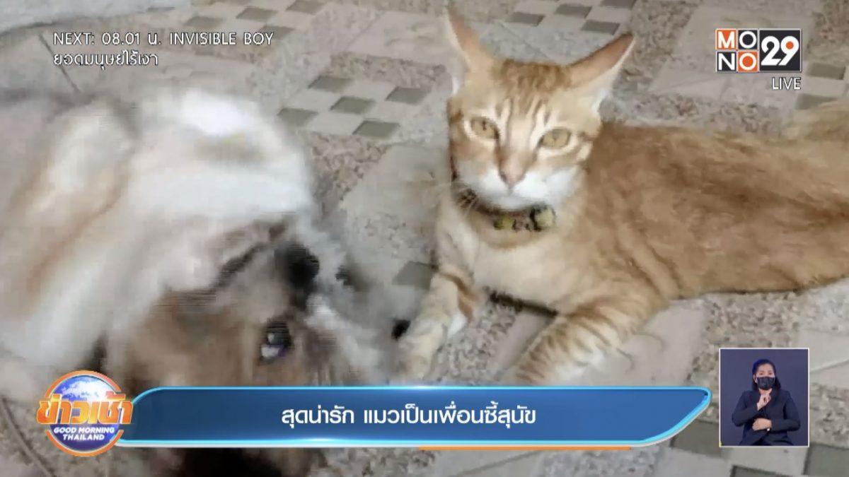 สุดน่ารัก แมวเป็นเพื่อนซี้สุนัข