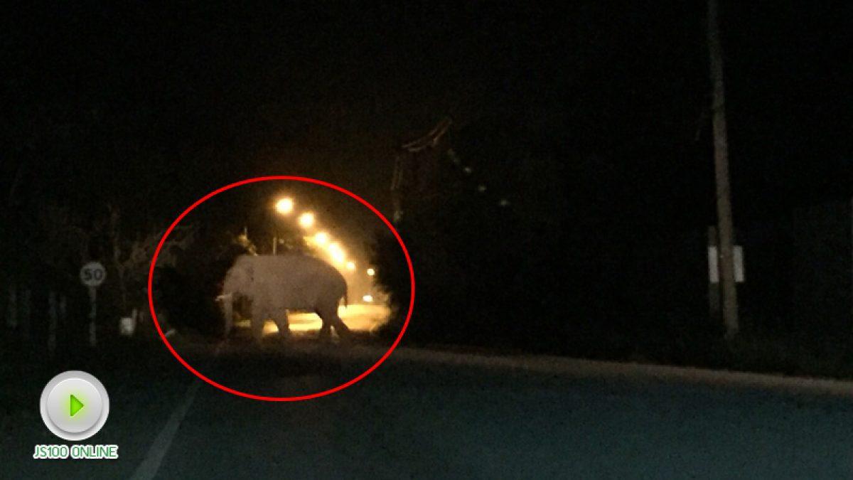 ปิคอัพเบรคไม่อยู่ขับพุ่งชนช้างบนเขาใหญ่ รถพังยับทั้งคัน คนปลอดภัย ช้างเตลิดเข้าป่า จนท.ยังติดตามเฝ้าระวัง (13-11-60)