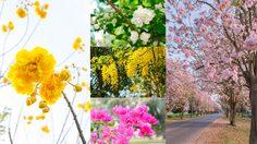 วิธีปลูก 8 พันธุ์ ดอกไม้ปลูกหน้าบ้าน งามดีต่อใจ ในช่วง หน้าร้อน