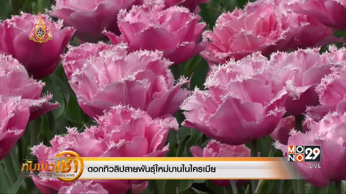 ดอกทิวลิปสายพันธุ์ใหม่บานในไครเมีย