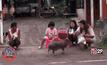 หมูป่า-สุนัข เดินตามพระบิณฑบาต