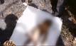 พบศพเด็กชาย 3 ขวบ ถูกทิ้งริมถนนอยุธยา-เสนา