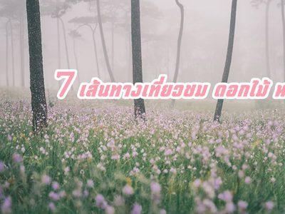 7 เส้นทางเที่ยวชม ดอกไม้ หน้าฝน ถูกใจคนรักธรรมชาติ