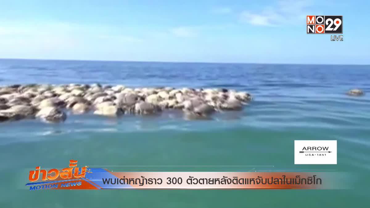 พบเต่าหญ้าราว 300 ตัวตายหลังติดแหจับปลาในเม็กซิโก