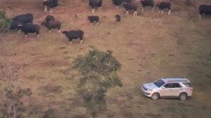 เผยแล้ว! กลุ่มคนขับรถชมกระทิงระยะใกล้ ที่เขตห้ามล่าสัตว์ป่าเขาแผงม้า