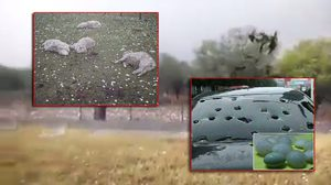แตกตื่น!! นาทีลูกเห็บถล่มสเปน ทำรถพัง – แพะตายเกลื่อน