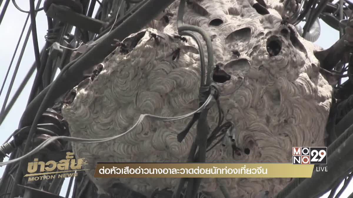ต่อหัวเสืออ่าวนางอาละวาดต่อยนักท่องเที่ยวจีน