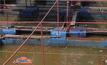 ปลากระชังลอยตายหลังแม่น้ำปิงลดระดับ