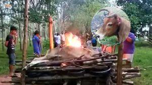 สุดเศร้า!  แม่วัวถูกตัดหูที่นครศรีฯ ตายแล้ว เจ้าของจัดงานเผาส่งร่าง