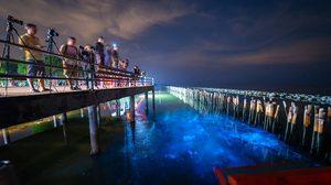 แพลงก์ตอนเรืองแสง ที่ สะพานแดง สมุทรสาคร ส่องแสงวิบวับยามค่ำคืน